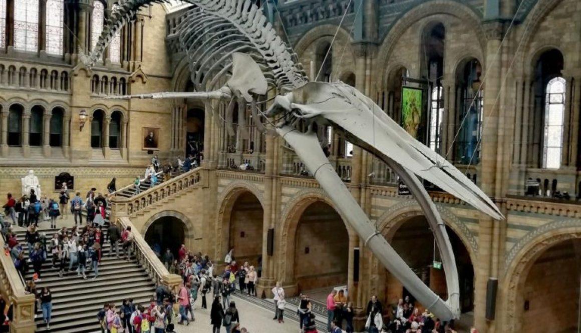 Muzeum Historii Naturalnej Londyn